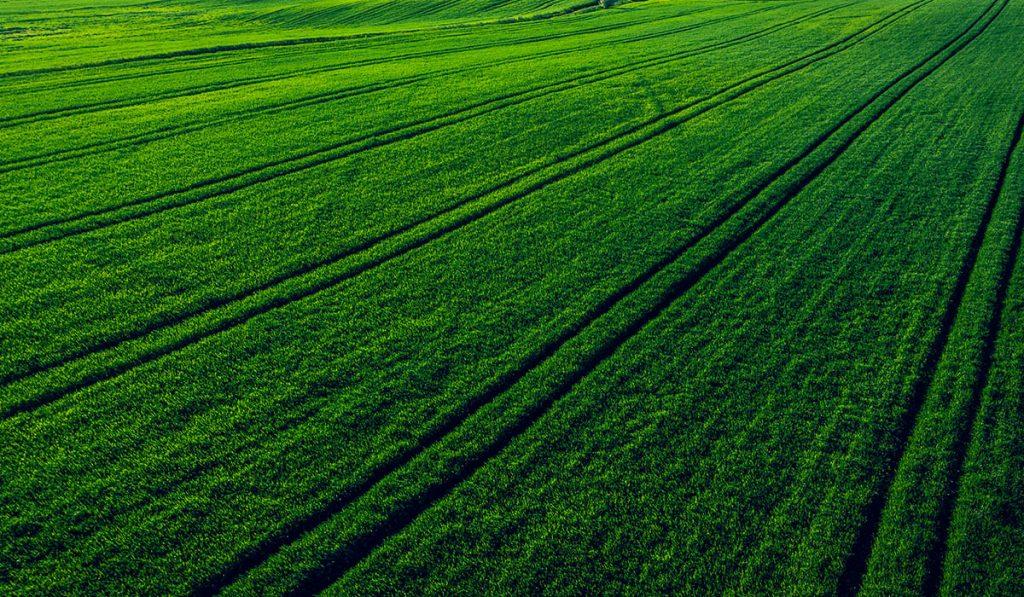 dronas žali laukai